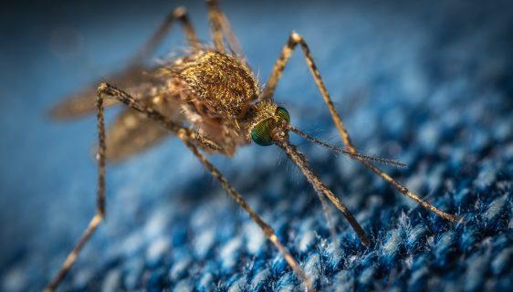 myggenet til vinduer